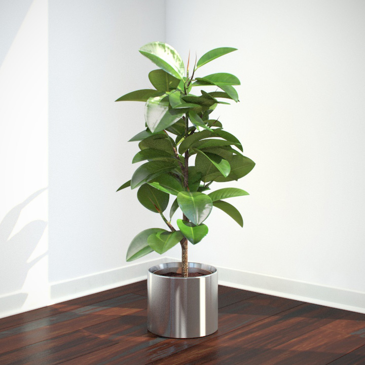 Vp ficus elastica feature image for Modern indoor plants