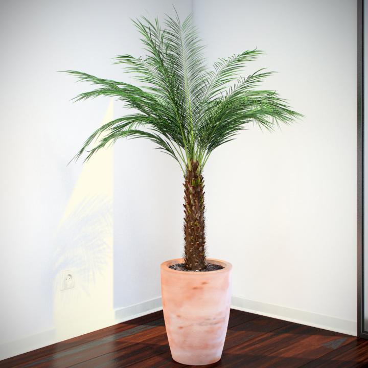 Phoenix Palm - 3D models