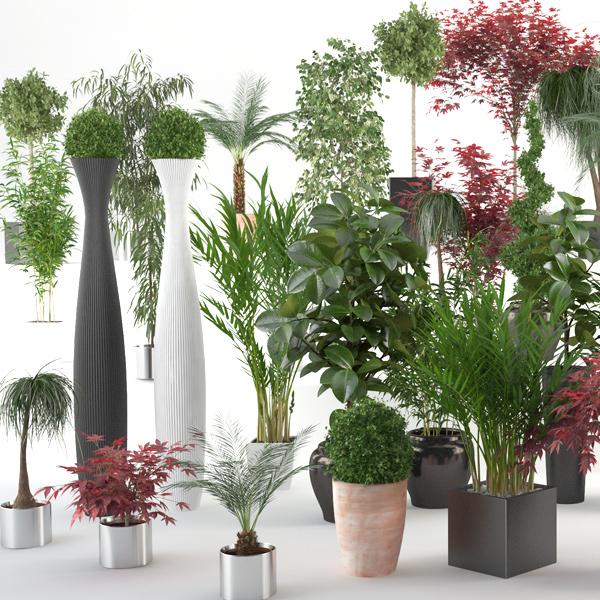 Interior Plants For Modo