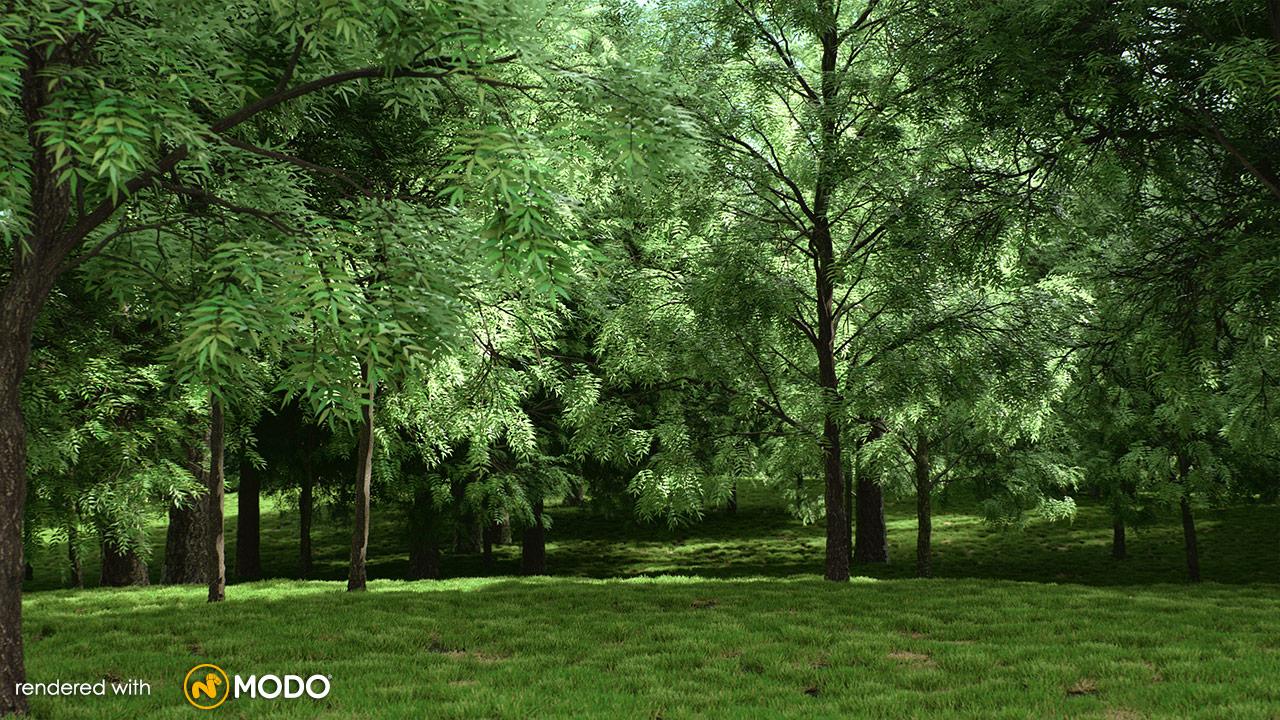 Common Oak Stock Photos & Common Oak Stock Images - Alamy
