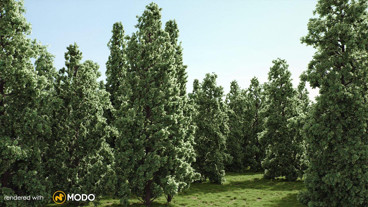 Tree Identification Quiz   The British Association for