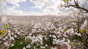 FPP preset - Magnolia Field