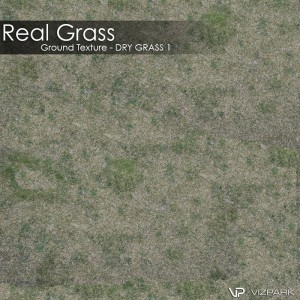 Ground Texture - Dry grass 1