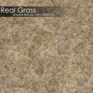 Ground Texture - Dry grass 2