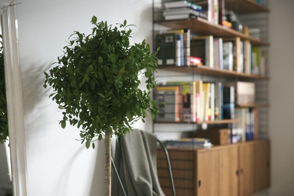Interior Plants (3D plant models)
