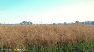 Aristida Purpurea - Purple three-awn grass