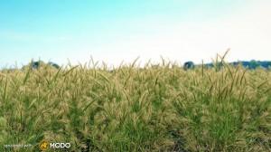 Hordeum Murinum - Wall barley grass