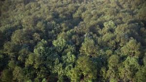 FPP preset - Deciduous forest