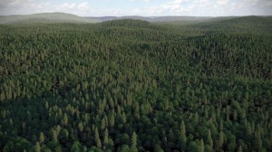 FPP preset - Mixed landscape forest