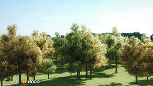 Ginkgo Biloba - Ginkgo Tree