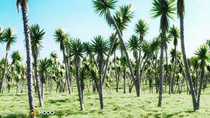 Yucca Aloifolia - Yucca Palm