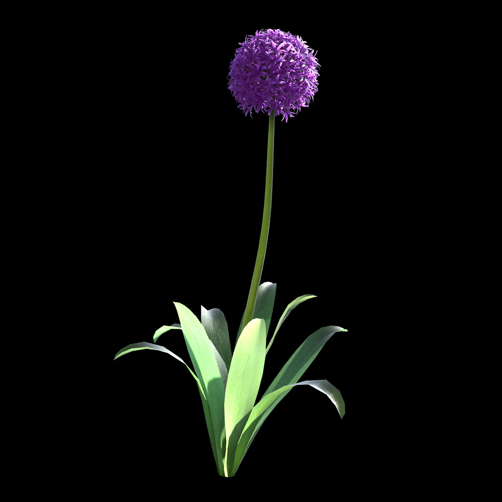 Garlic Flower - Variation 1
