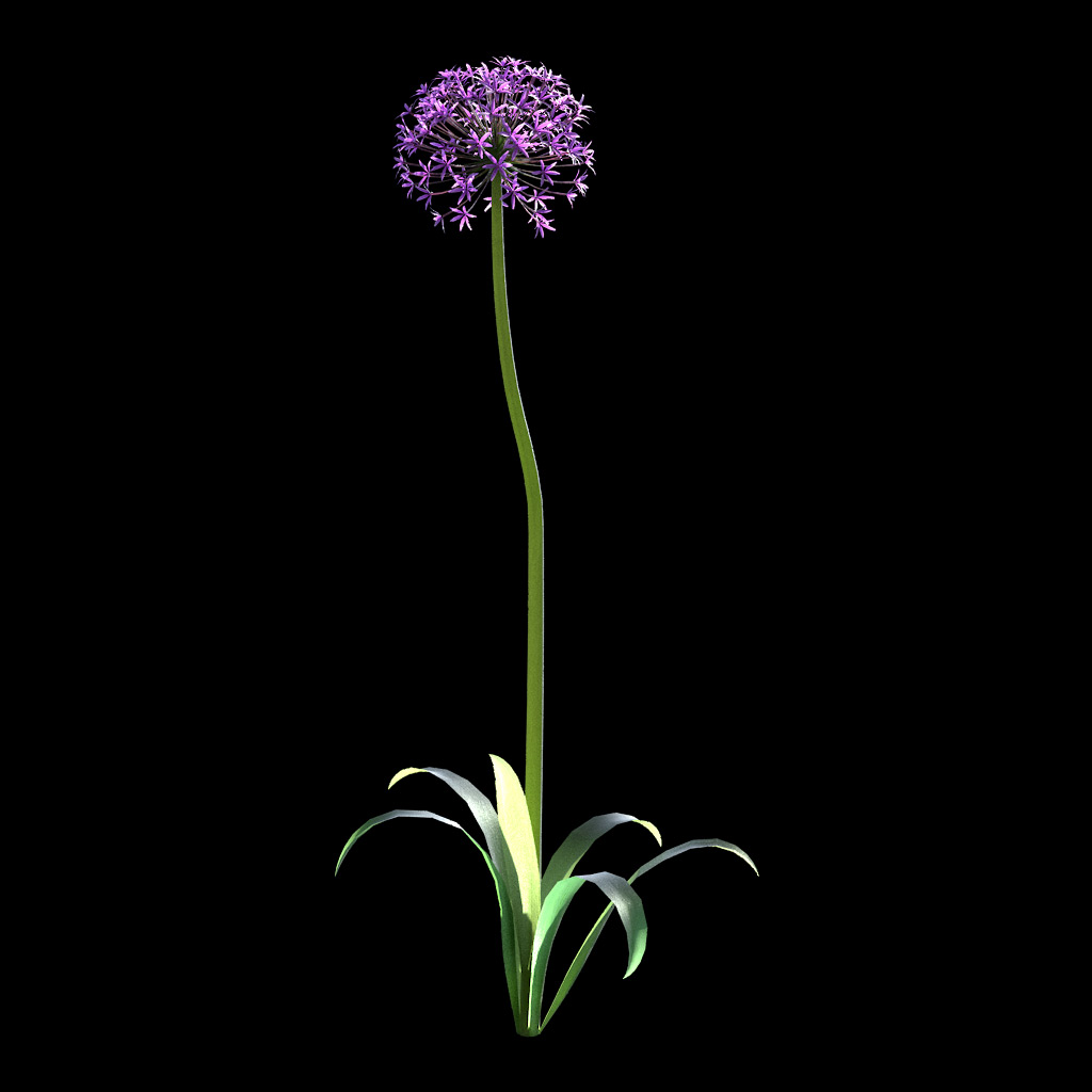 Garlic Flower - Variation 4