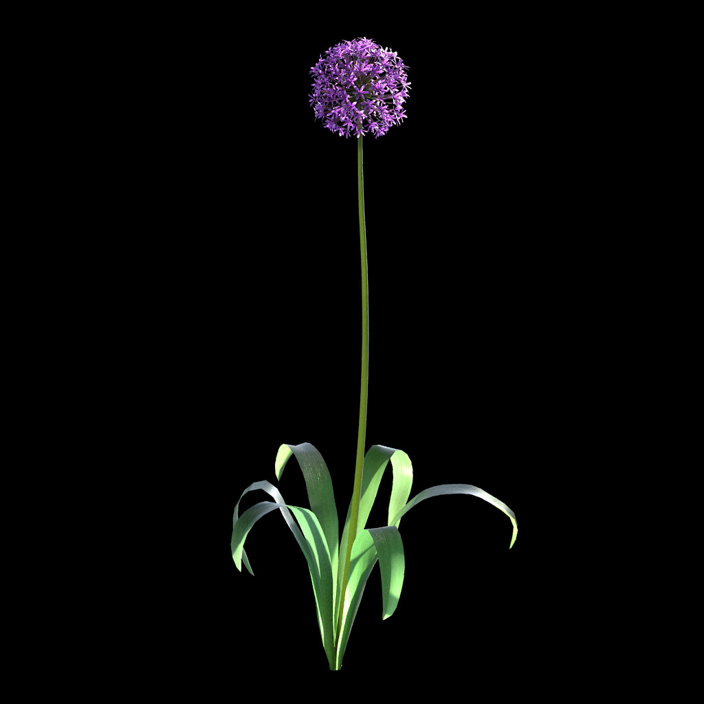 Garlic Flower - Variation 5