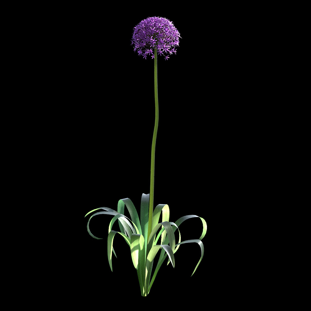 Garlic Flower - Variation 6