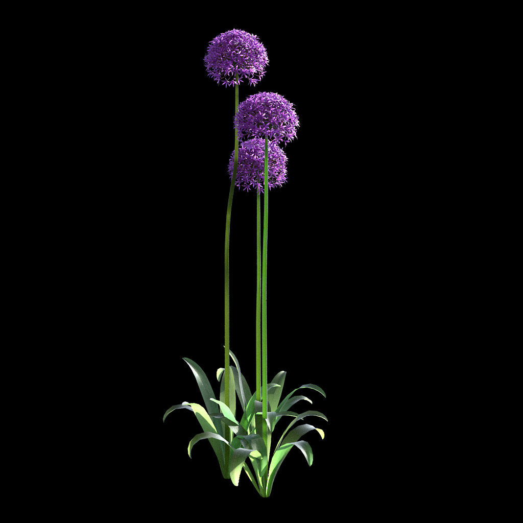 Garlic Flower - Variation 8