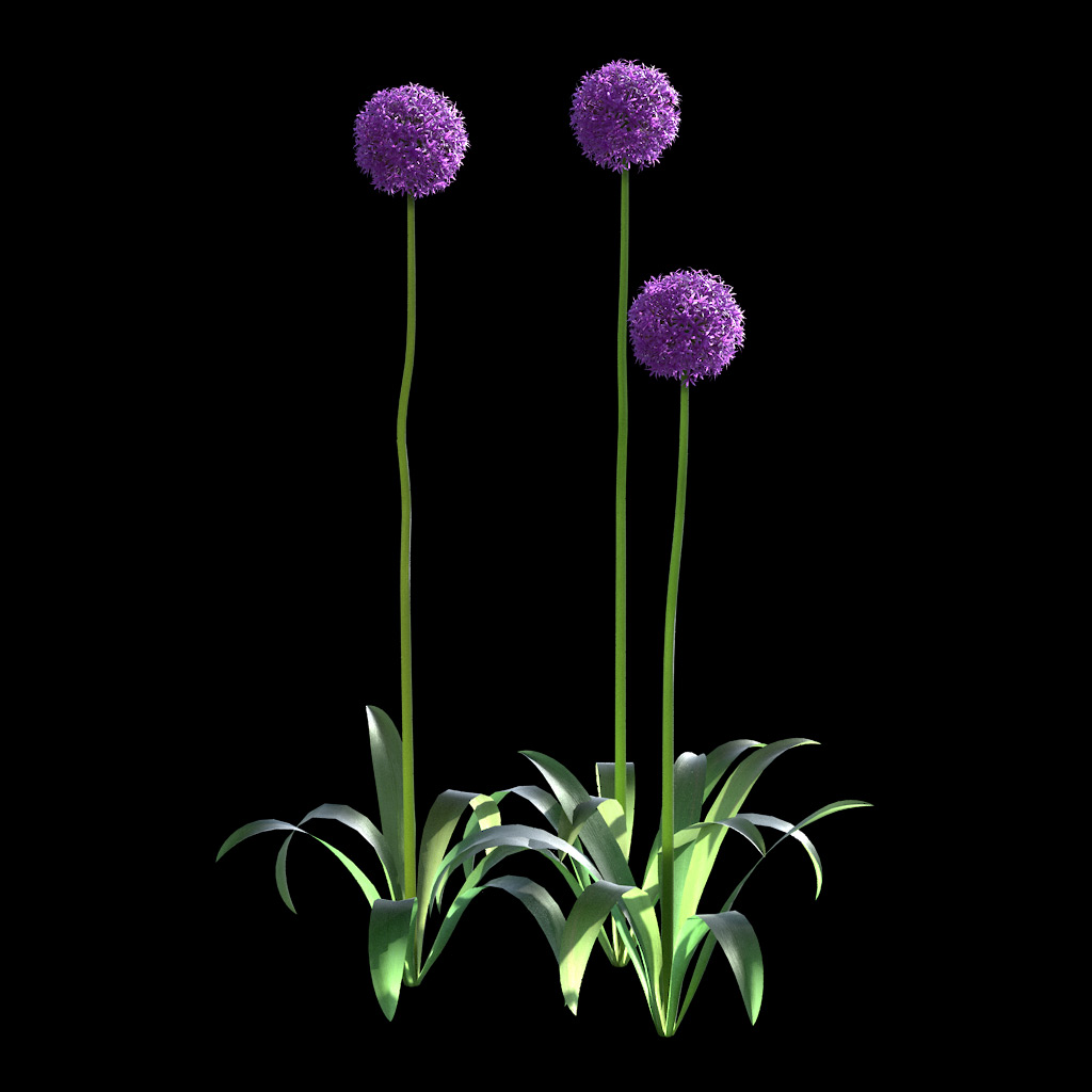 Garlic Flower - Variation 9