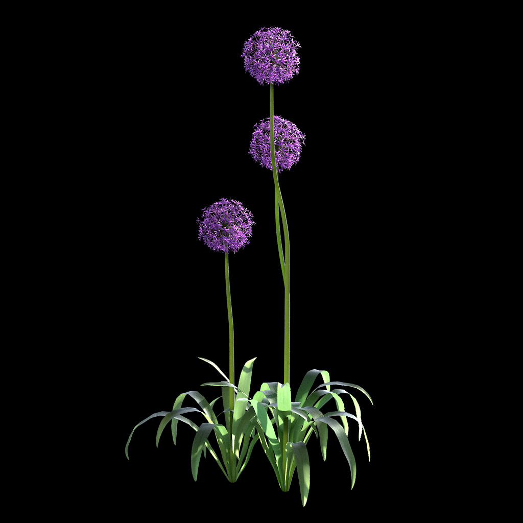 Garlic Flower - Variation 10