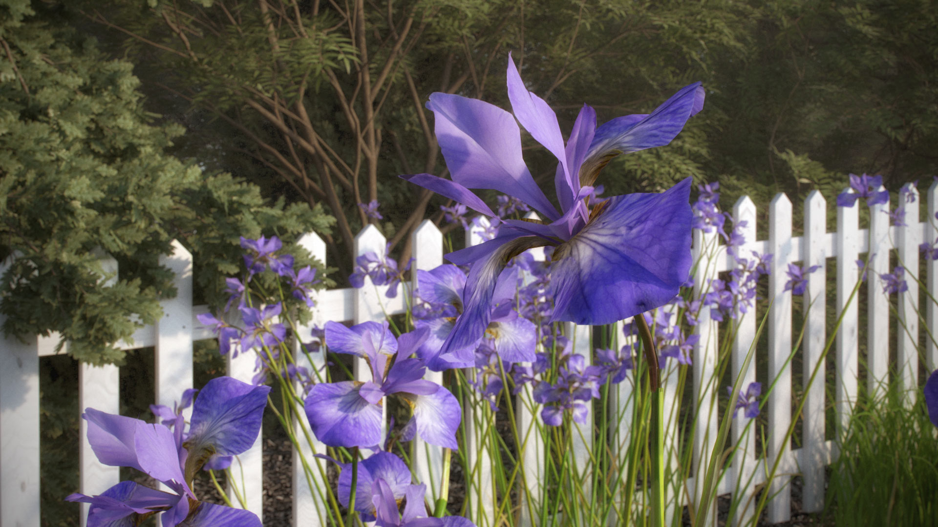 Iris flowers included models 10 different shrubs vp iris flowers izmirmasajfo