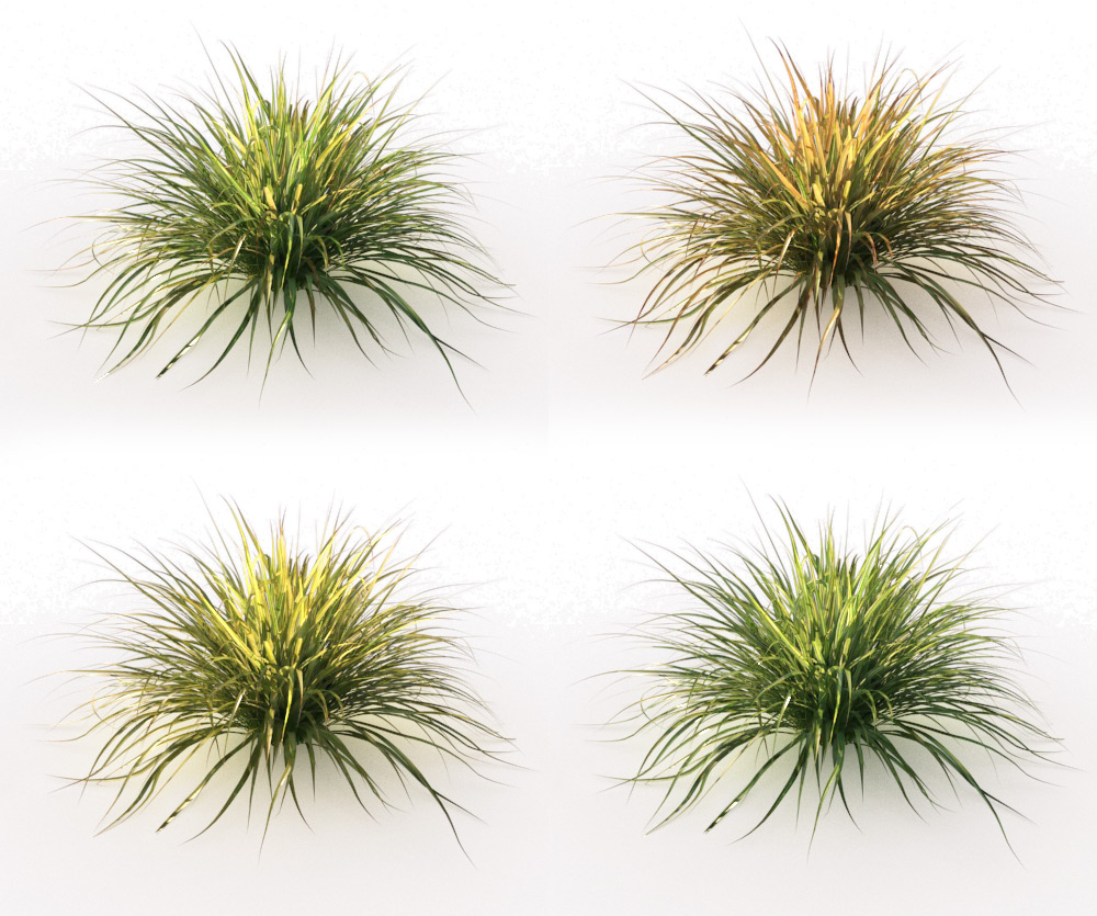 Japanese Sedge Grass