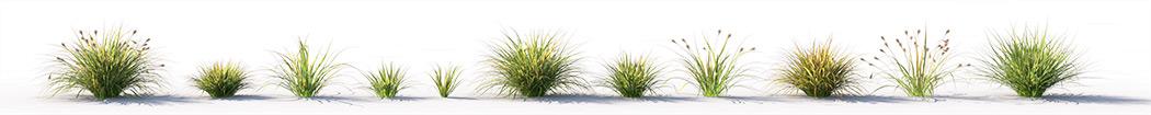 VP Japanese Sedge Grass