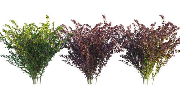 3D shrub material variations